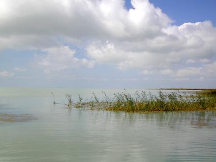 Тарейские озера - болотные угодья
